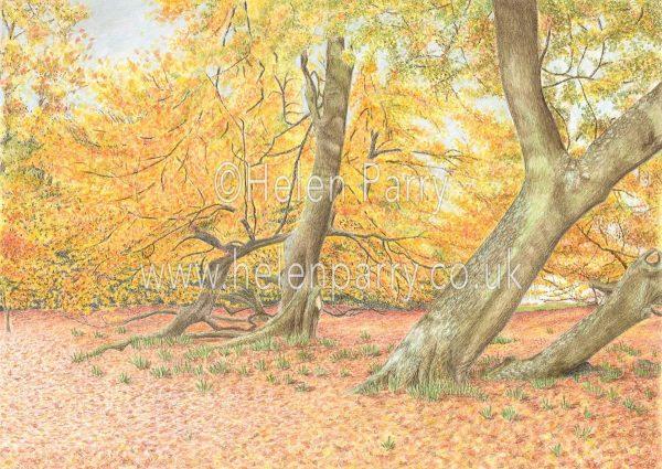 autumn colours watercolour painting