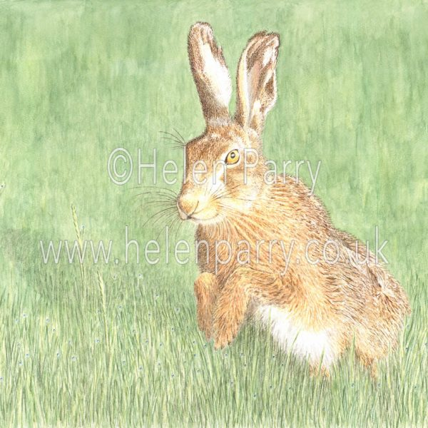 fine art print of brown hare in grasses