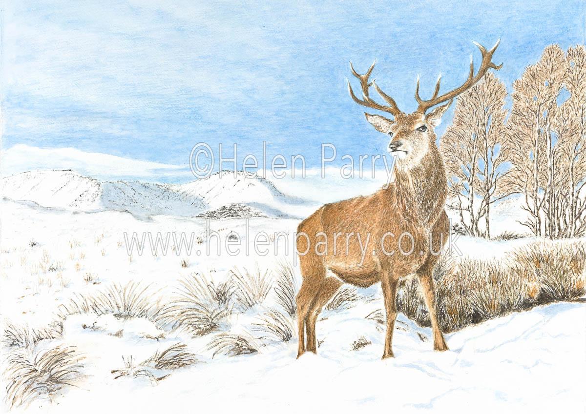 fine art print of stag deer in winter landscape