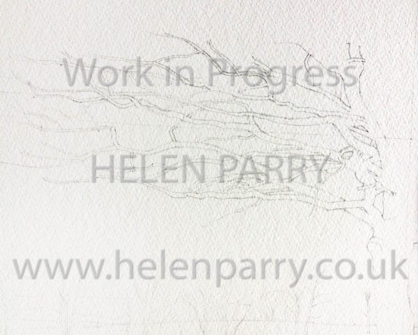 start of pencil layout of oak tree branching out painting