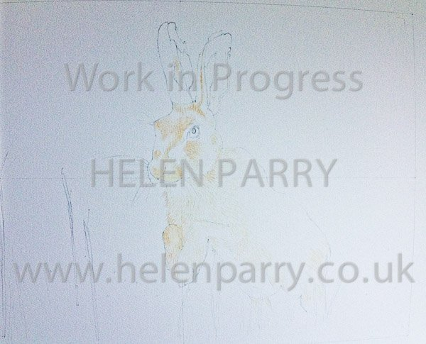 First stage Brown Hare watercolour