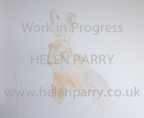 Second stage Brown Hare watercolour