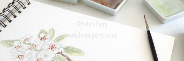 close up of pear blossom watercolour painting