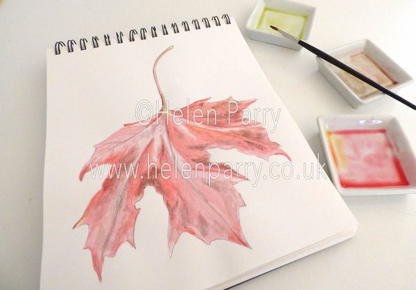 watercolour painting of red maple leaf in studio
