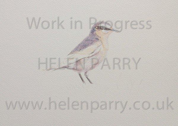 Progression of watercolour of a Wheatear Bird