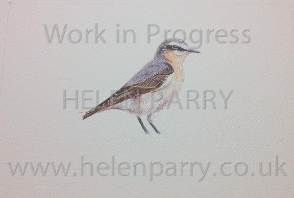 Nearly complete watercolour painting of Wheatear Bird