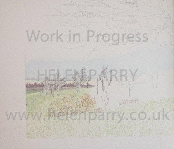 First stage Oak Tree watercolour