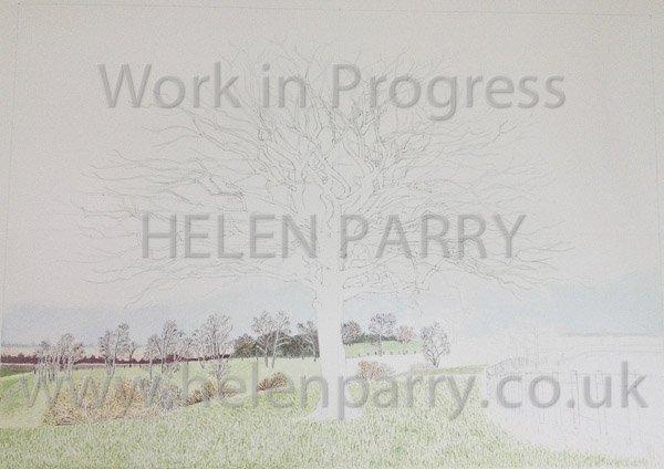 Second stage Oak Tree watercolour