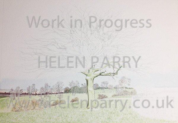 Third stage Oak Tree watercolour