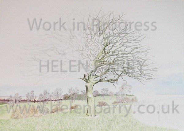 Fourth stage Oak Tree watercolour