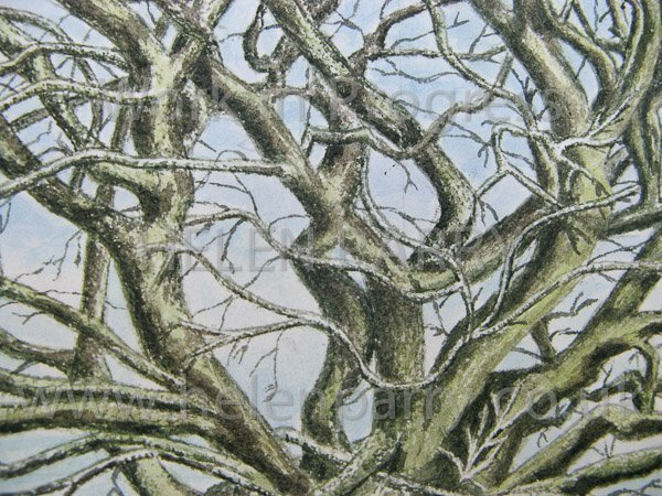 Close up of Oak Tree watercolour detail