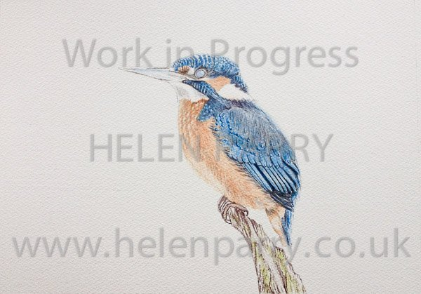Second stage Kingfisher watercolour