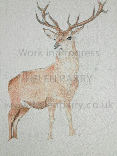 First update Stag in Winter watercolour