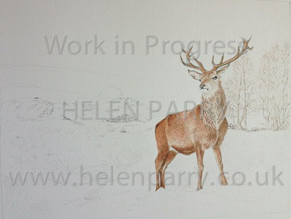 Second update Stag in Winter watercolour