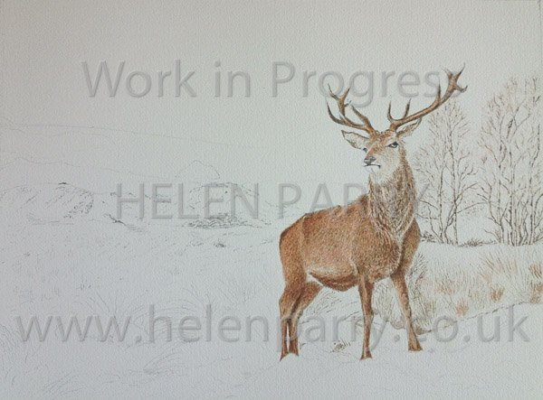 Third update Stag in Winter watercolour