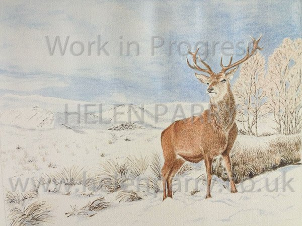 Fourth update Stag in Winter watercolour