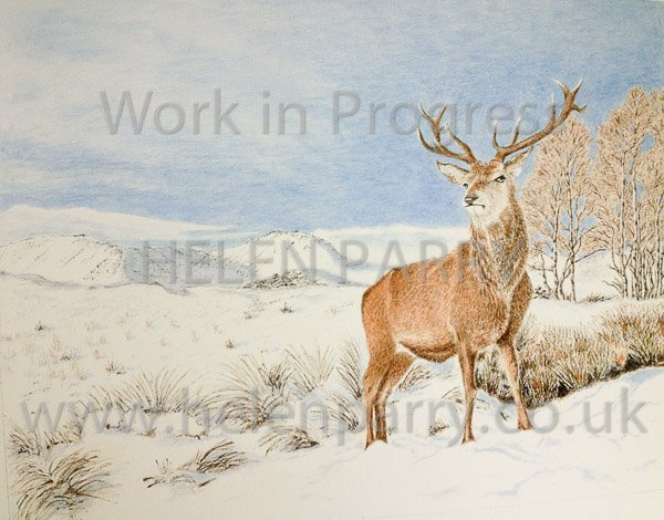 Fifth update Stag in Winter watercolour