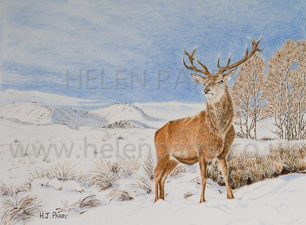 Stag in Winter watercolour painting