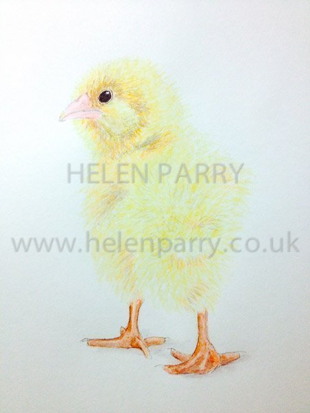 30 minute Watercolour Challenge - Easter Chick