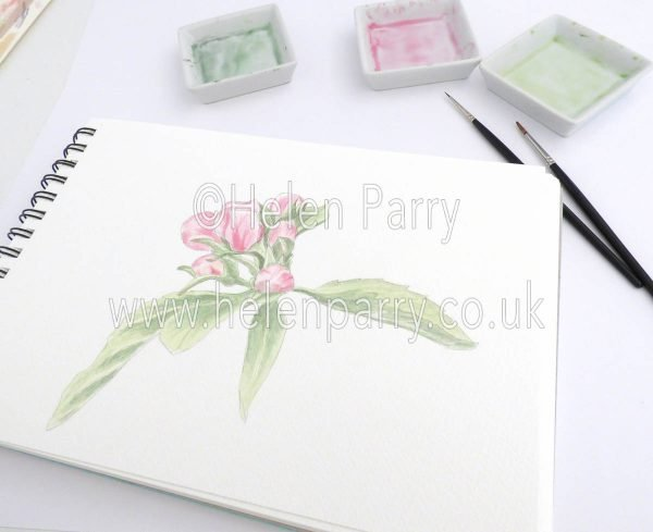 watercolour painting of apple tree buds in studio