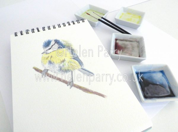watercolour painting of Blue Tit in artist studio