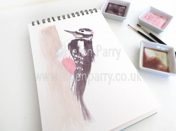 watercolour painting of Great Spotted Woodpecker bird in studio