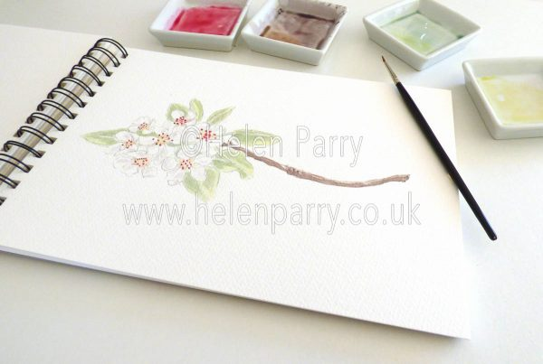 watercolour painting of pear blossom in studio