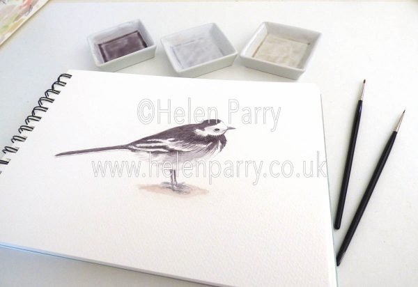 watercolour painting of pied wagtail bird in artists studio