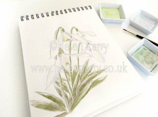 watercolour painting of snowdrops galanthus in studio