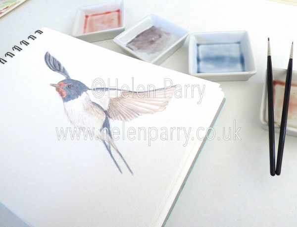 watercolour painting of swallow flying in artists studio