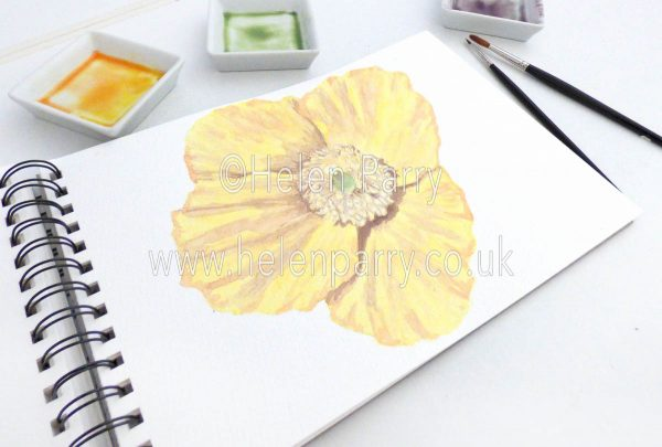 watercolour painting of yellow poppy in studio