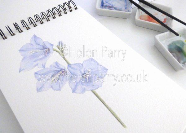 watercolour painting of campanula flowers in studio