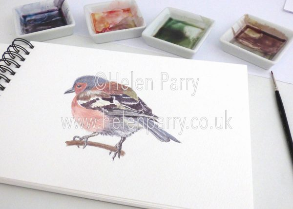 watercolour painting of Chaffinch bird in artists studio