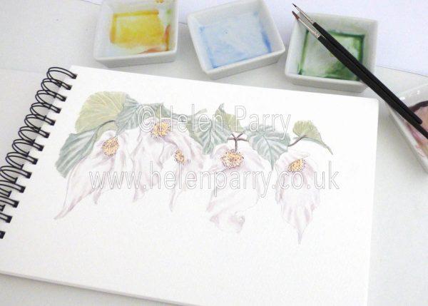 watercolour painting of handkerchief tree davidia in studio