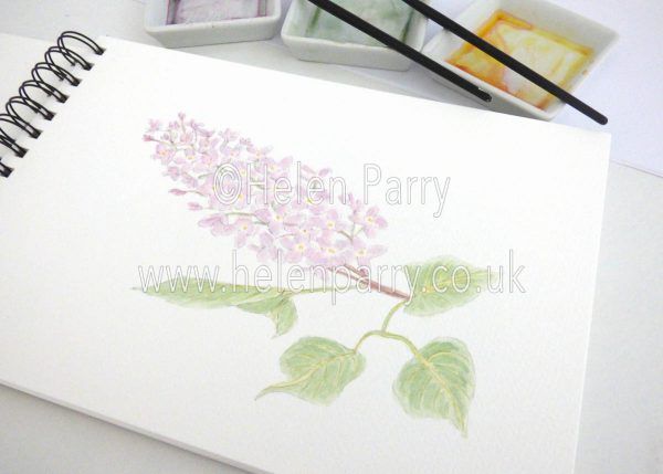 watercolour painting of lilac flowers in studio