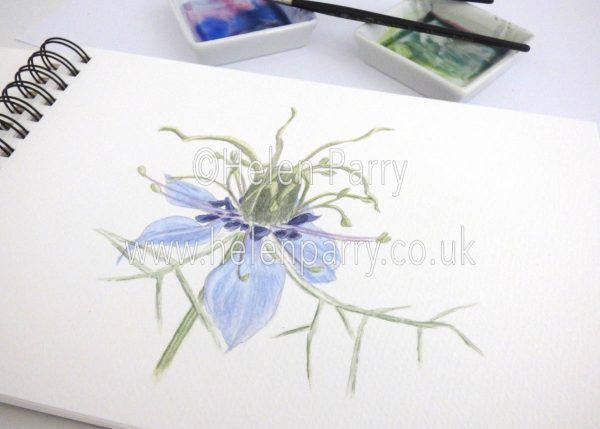 watercolour painting of nigella flower in studio