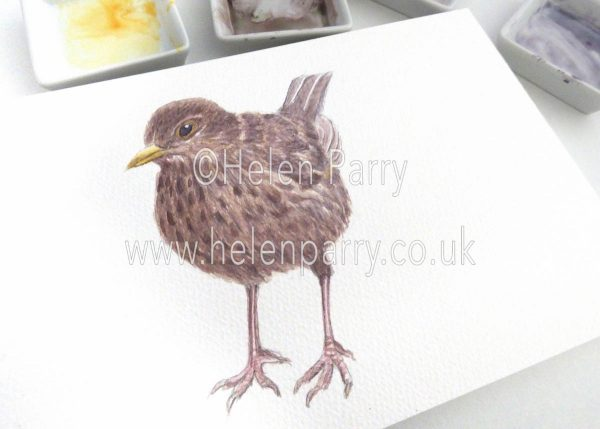 watercolour painting of female blackbird in artists studio