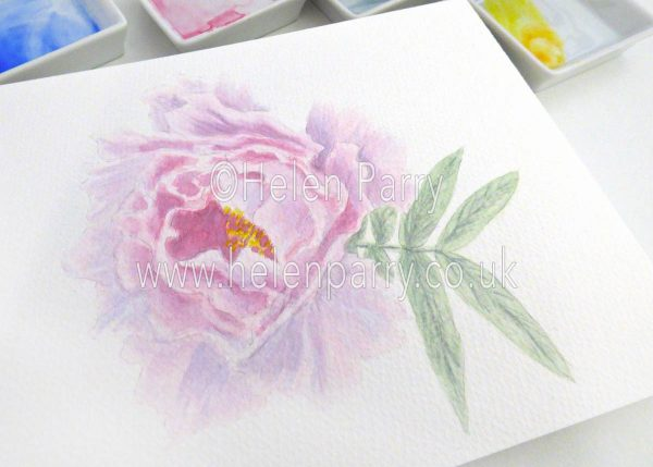 watercolour painting of peony flower in studio
