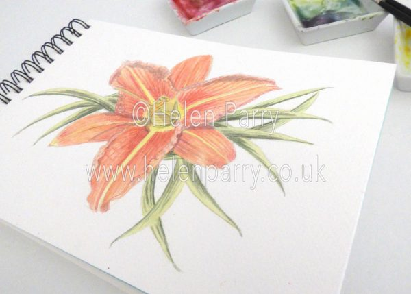 watercolour painting of orange daylily flower in studio