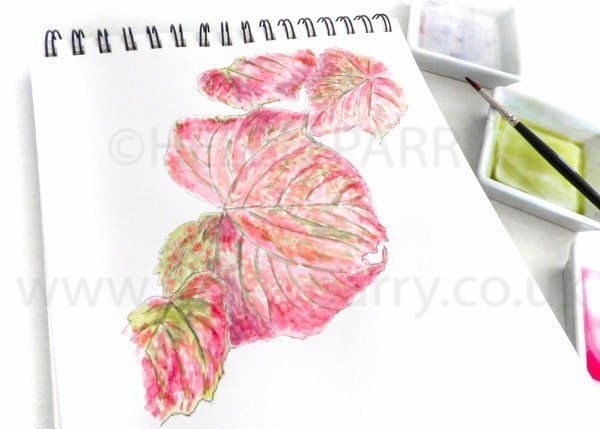 Crimson Vine leaves watercolour sketch