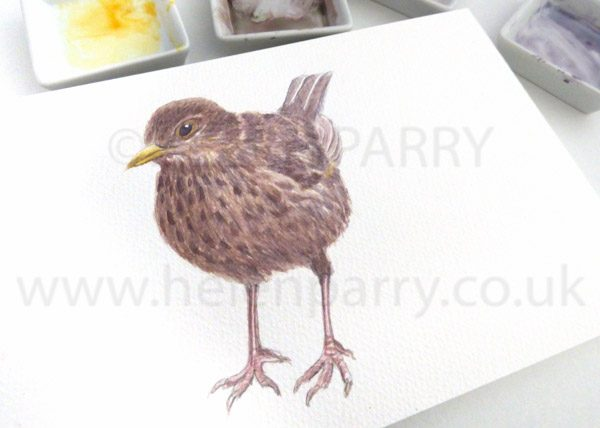 Helen-Parry-Watercolour-Artist-Female-Blackbird-1-of-1.jpg