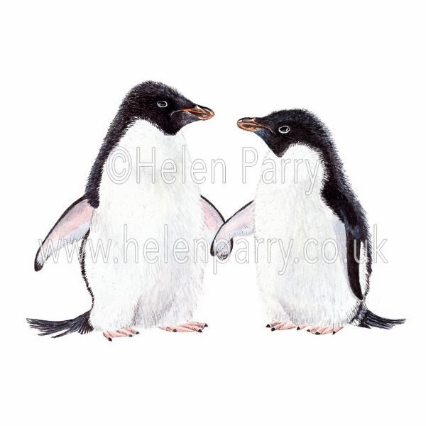 greeting card of penguins together watercolour
