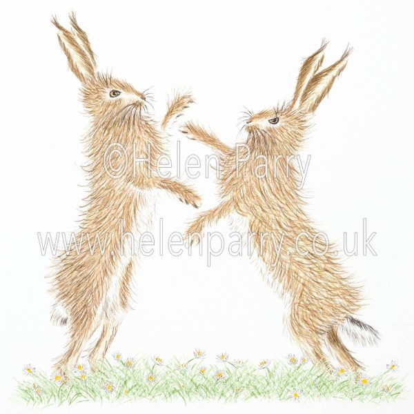 greeting card of boxing hares in the grass