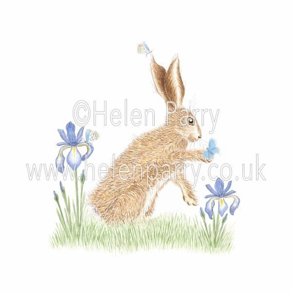 greeting card of hare looking at butterflies