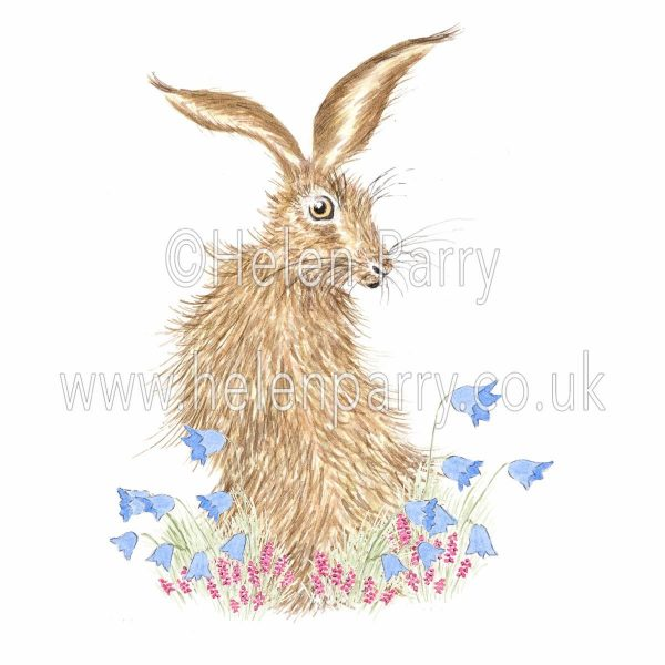 greeting card of hare looking back amongst harebells and heather