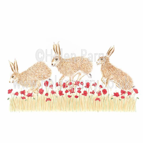 greeting card of hares jumping through poppy field
