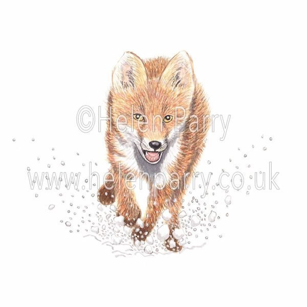 greeting card of fox running in snow flurries