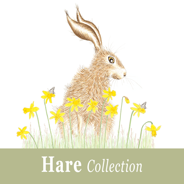 Hare Collection