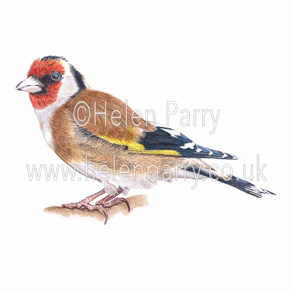 greeting card of Goldfinch bird watercolour