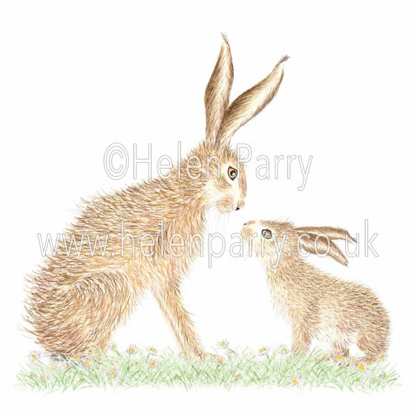greeting card of leveret looking up at hare parent